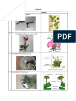 Lampiran Biologi Tumbuhan[1]