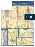 Quick Study          Review    Anatomy.pdf