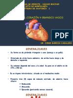 Pericardio -Corazón - Clase
