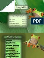 Amphibia A 7.pdf