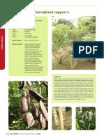 Caesalpinia sappan L..pdf