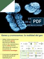Extencion genética