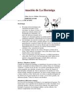 Información de La Hormiga435345