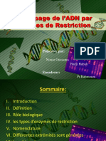 Découpage L'ADN Par Les Enzymes de Restriction