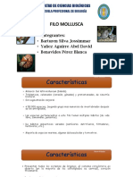 zoologia moluscos