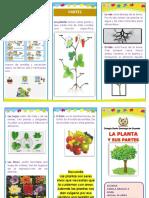 Triptico Las Plantas