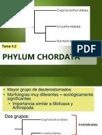 Power de Phylum Chordata