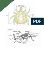 entomologia.docx