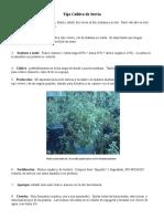 Agricultura Cultivo Stevia
