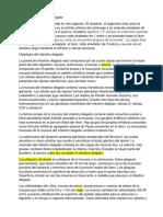Anatomía Del Intestino Delgado