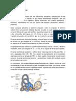Canales Semicirculares (1)