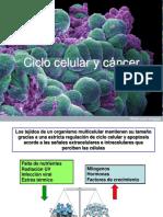 2 División Celular y Cancer