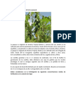 Historia de La Papaya
