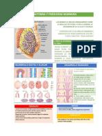 Anatomia y Fisiologia Mamaria