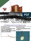Clase Membranas (1)