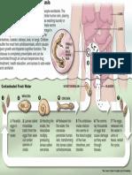 schisto-disease-cycle.pdf