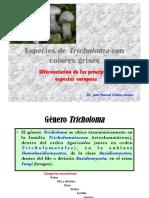 TRICHOLOMA-grises_JMV
