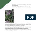151 Especies Conocidas de Papa Silvestre