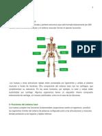 Sistema óseo, APARATO LOCOMOTOR Y MUSCULOS.docx