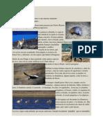 Fauna del parque nacional Perito Moreno