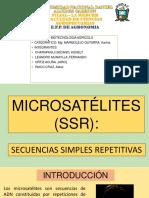 ssr microsatelite