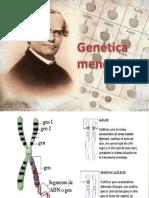 genetica-mendeliana