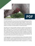 Habronemiasis cutánea equina