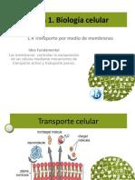 1.4 Transporte a Través de Membranas Ot 15(1)