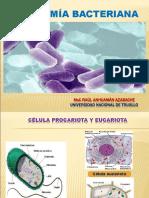 c. Anatomía Bacteriana.
