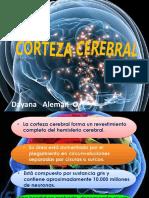 cortezacerebral-141001234909-phpapp01