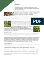 Astragalus, A Planta Da Longevidade