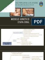 Modelo Genetico