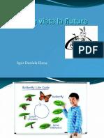 Ciclul de Viata La Fluture
