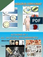 Tema 1 Organizacic3b3n Del Ser Humano 1718