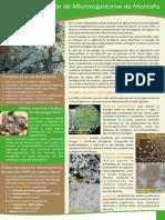 Microorganismos Eficientes Peru Como Hacerlos