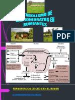 CARBOHIDRATOS EN RUMIANTES (1).pdf