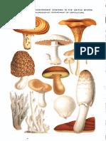 Twelve Edible Mushrooms of the United States 1894