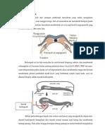Embriologi Jantung