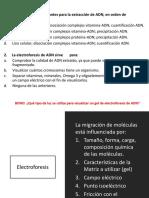 3. Electroforesis de ADN (1)