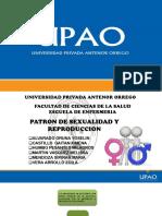 PATRON-DE-SEXUALIDAD-Y-REPRODUCCION.pptx