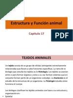 17. Estructura y función animal.pdf