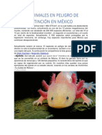 10 Animales en Peligro de Extinción en México