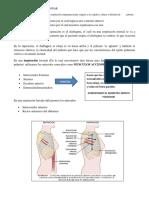338937020-CAP-38-Fisiologia-de-Guyton-13-edicion.docx