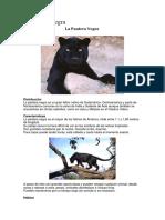 Descripción Pantera Negra