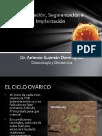 Fecundacionsegmentacioneimplantacion 150909235252 Lva1 App6892