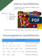 Microorganismos Quimilitótrofos.pdf