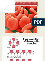 hemoglobin degradation. Ist year MBBS, by Dr waseem