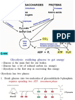 Glycolysis TCA ETC