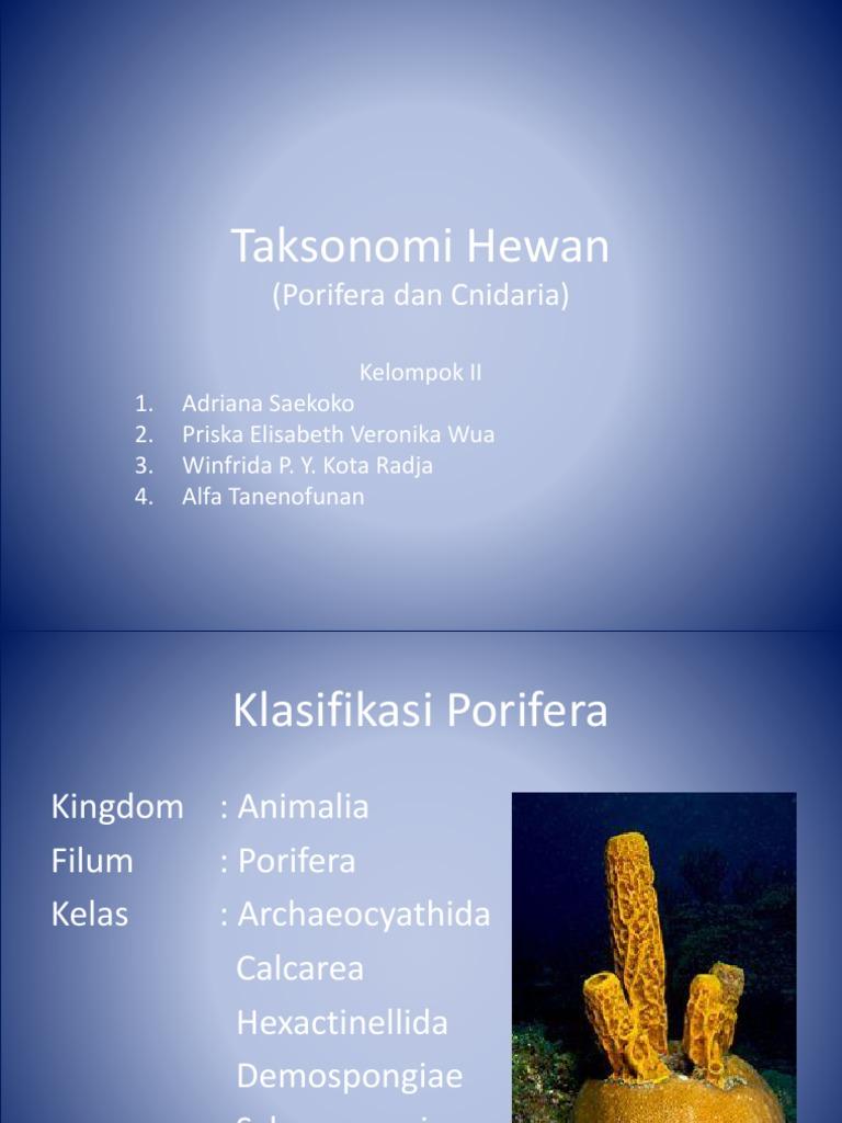 660 Gambar Hewan Porifera Dan Ciri Cirinya Terbaru