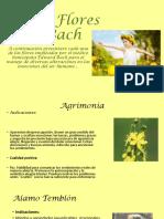 38 flores de bach.docx